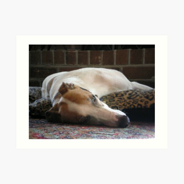 Greyhound laying on rug Art Print