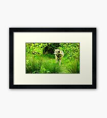 Wolf in the Woods Framed Print