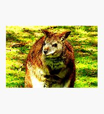 Juvenile Wallaby Photographic Print