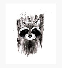 Racoon Ink Portrait. Photographic Print