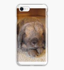 Lop eared rabbit iPhone Case/Skin
