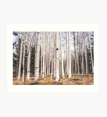Birch Forest, Trees of Reason Art Print
