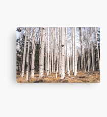 Birch Forest, Trees of Reason Canvas Print