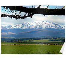 The Grazers View.. Mossburn Dairy Farm - NZ Poster