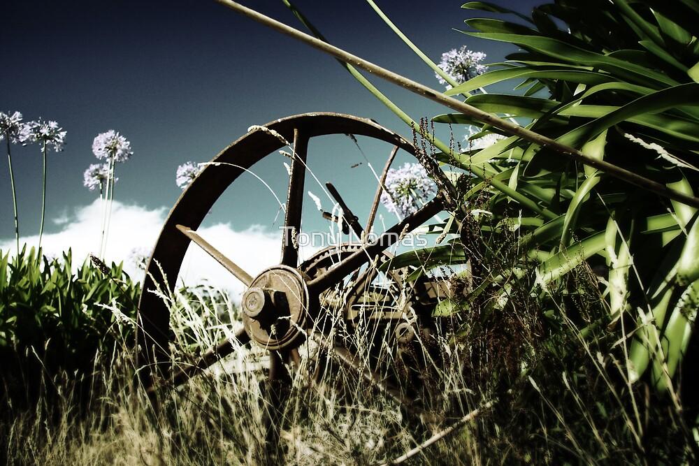Tractor Wheel by Tony Lomas
