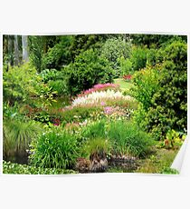 Reawaken Nature's Serum - Maple Glen Gardens - NZ Poster