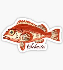 Sebastes fish with big eyes Sticker