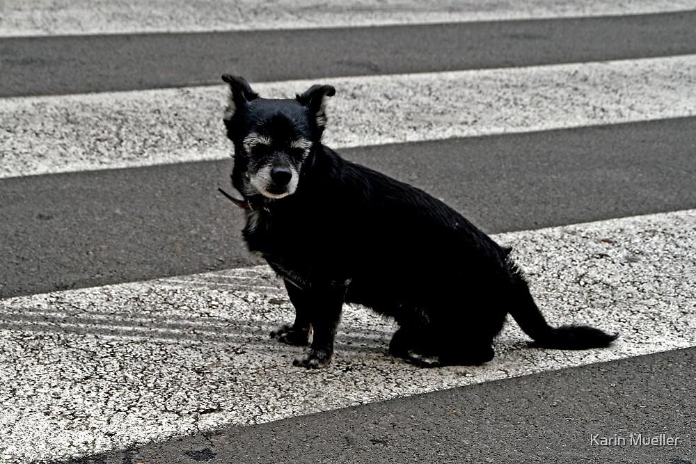 dog by Karin Mueller