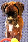 Feeling Blue - Boxer Dogs Series by Evita