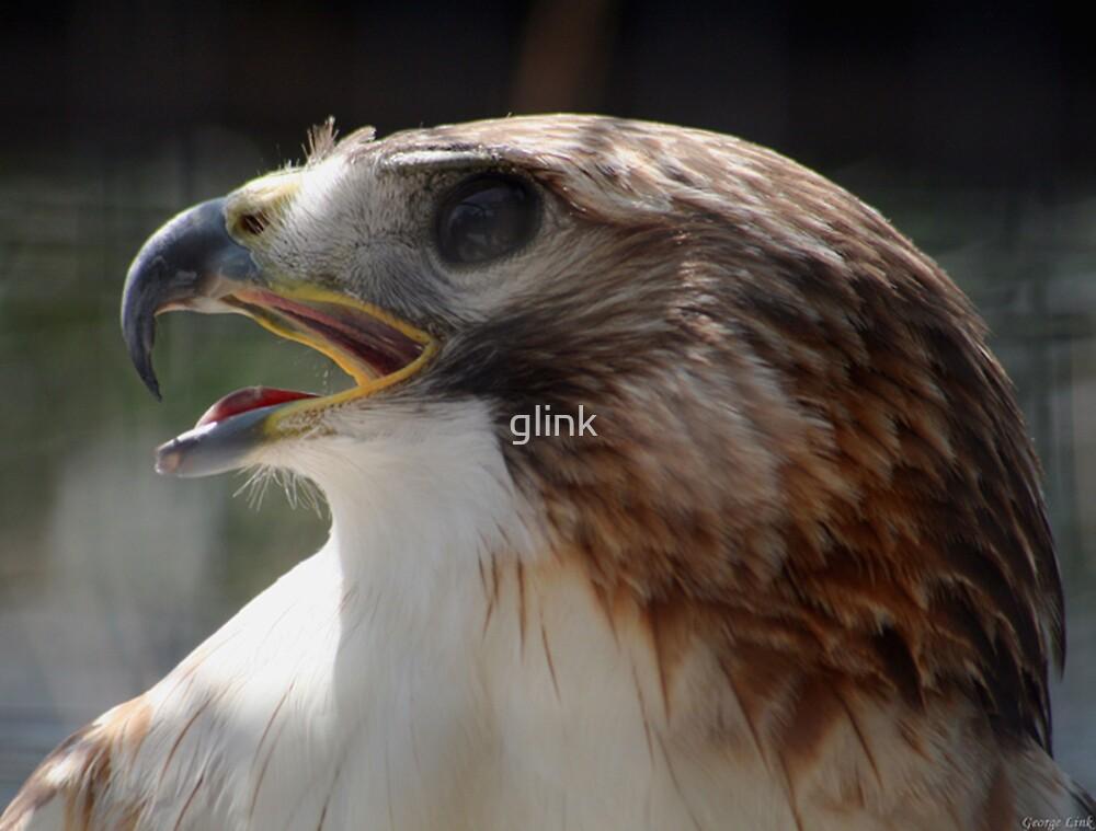Red-Shoulder Hawk by glink