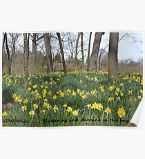 Daffodils Greeting Card Poster