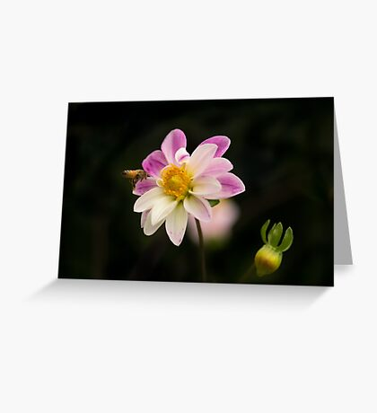 Making a Beeline for the Dahlia Greeting Card
