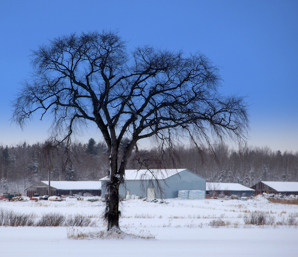 winter by Jason LeRue