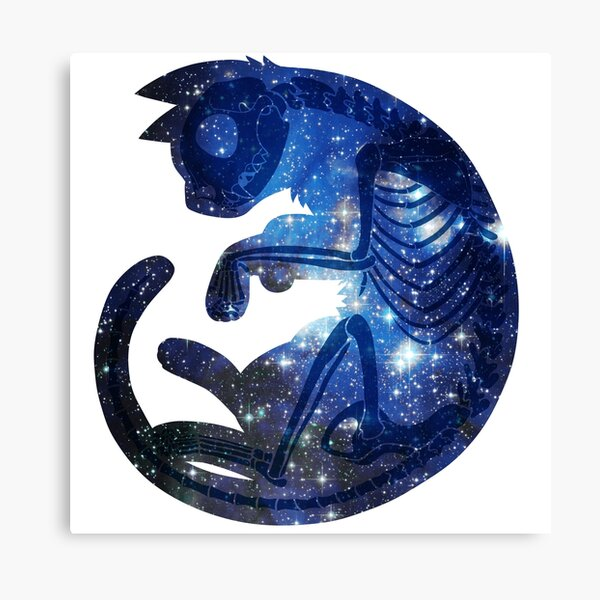 Star Cat Canvas Print