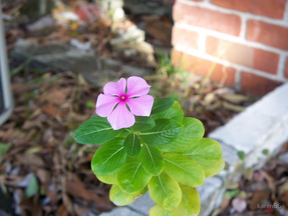 Little Pink Flower by karen66