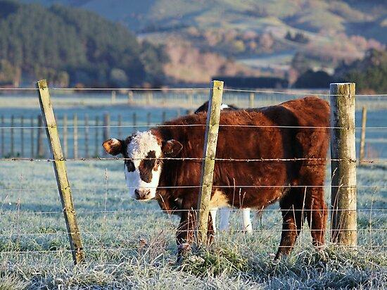 Brown Bull Calf by KarenWoodArt