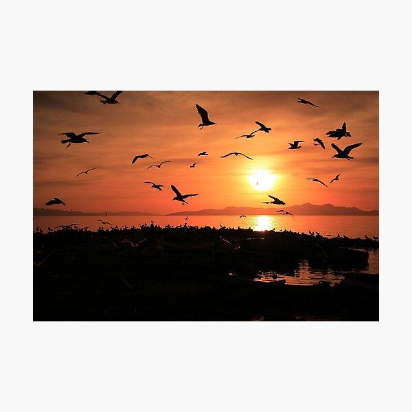Sunset Flights Photographic Print