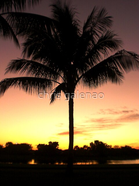 palm  by chris galenao