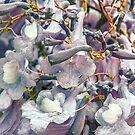 Jacaranda Blooms by shhevaun