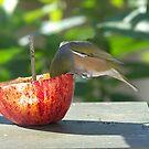 Beautiful New Zealand Apple and Bird.......!! by Roy  Massicks