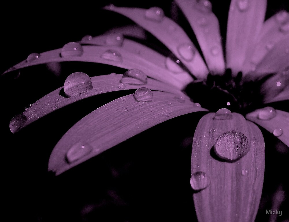 Passionate about Purple by Micky