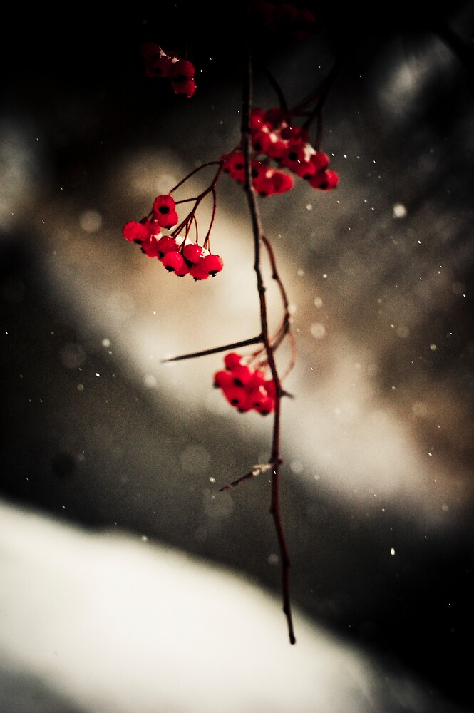 Winter Berries by Justin Leveque