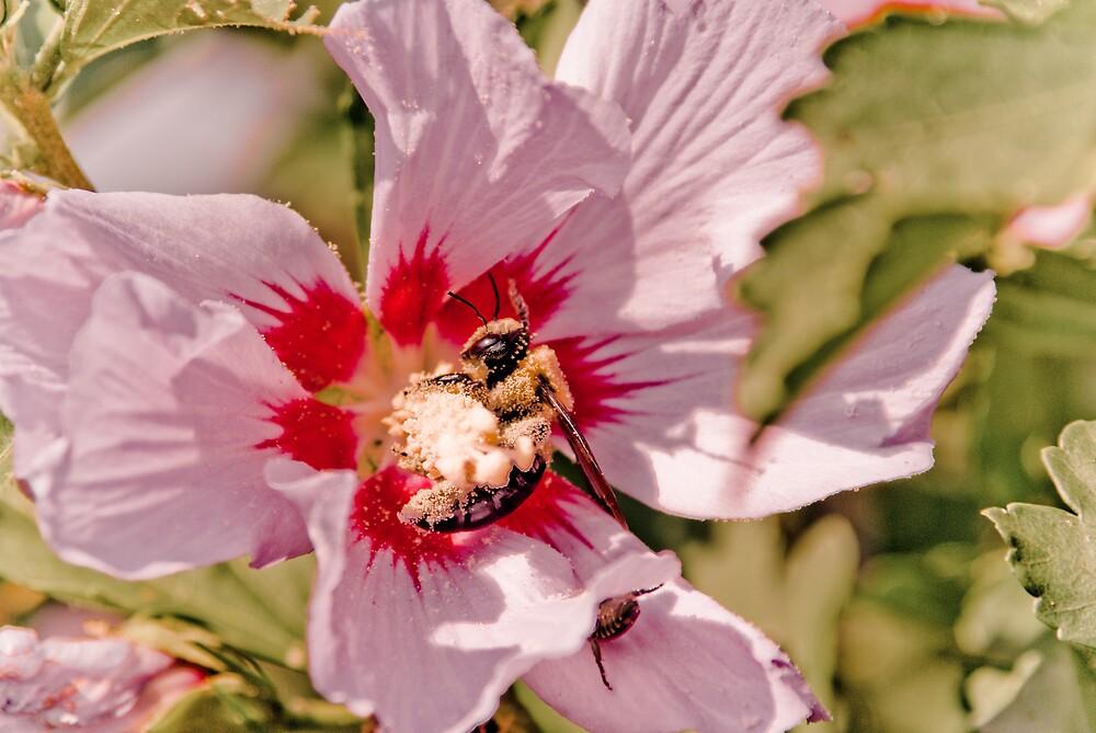Pollen Overdose by Rod  Adams
