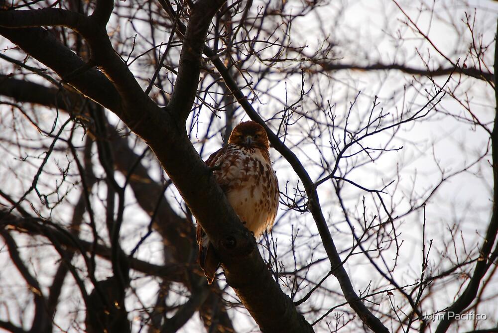 I'm watchin You! by John Pacifico