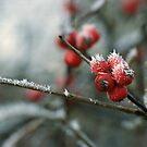 Frost by Debja