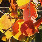 Autumn colour by Jonesyinc
