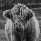 Highland cow III by peggieprints