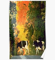Cows crossing the road Poster