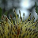 The Flowering Desert by Ben Loveday