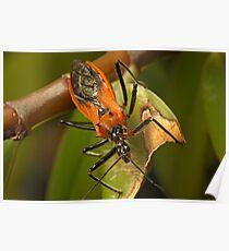 Assassin Bug Poster