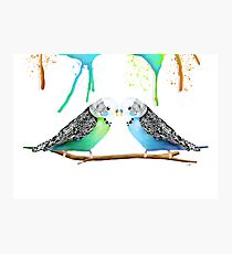 Budgie Love Photographic Print