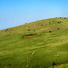 Cows on the Hill by Tilt.23 Photography