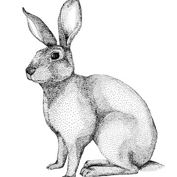 Bunny Hare Rabbit by linnw
