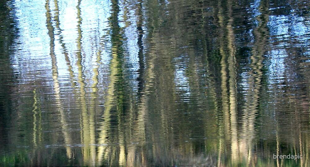 Whiteknights Lake by brendapic