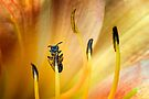 Small Black British Bee  by Sara Sadler