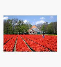 The Tulip Farmer Photographic Print