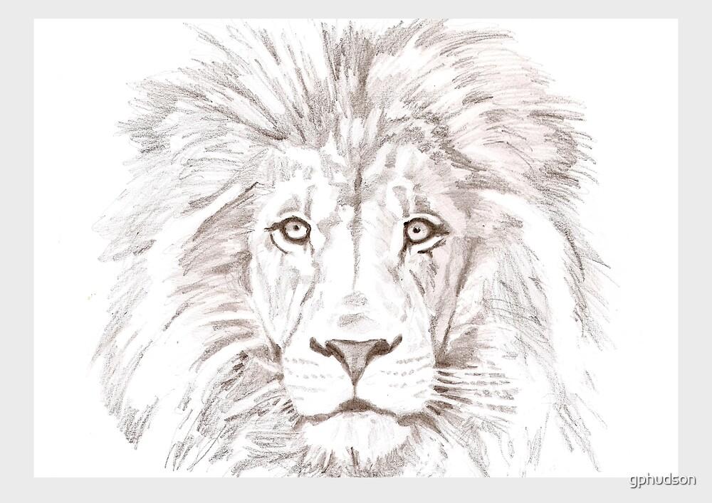Lion by gphudson