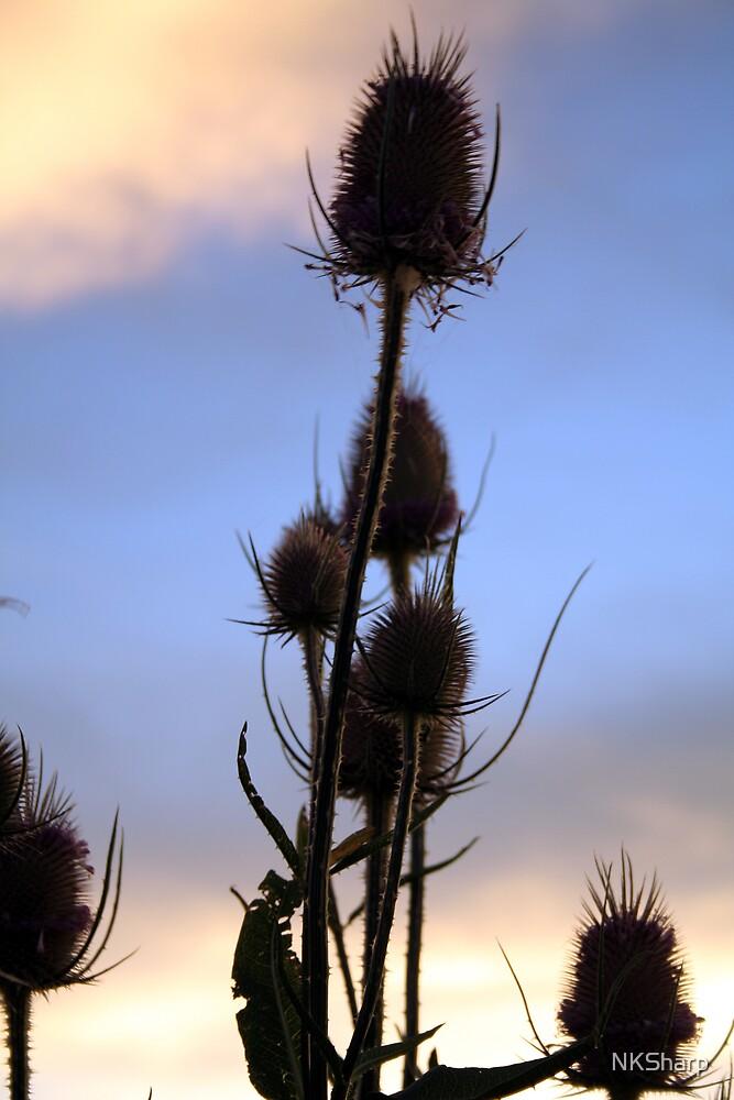 Wild thistles against evening sky by NKSharp