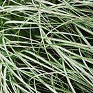 Grass by Jonesyinc