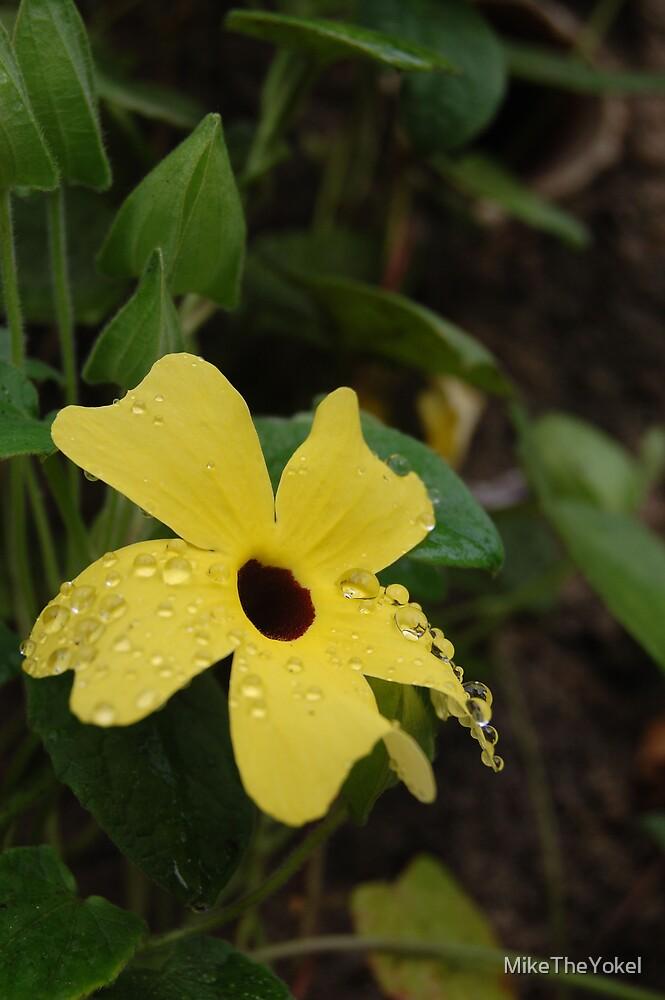 flower in eden by MikeTheYokel