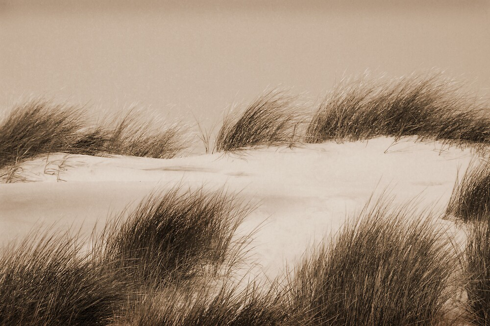 Sand Dunes in sepia by Bev Evans