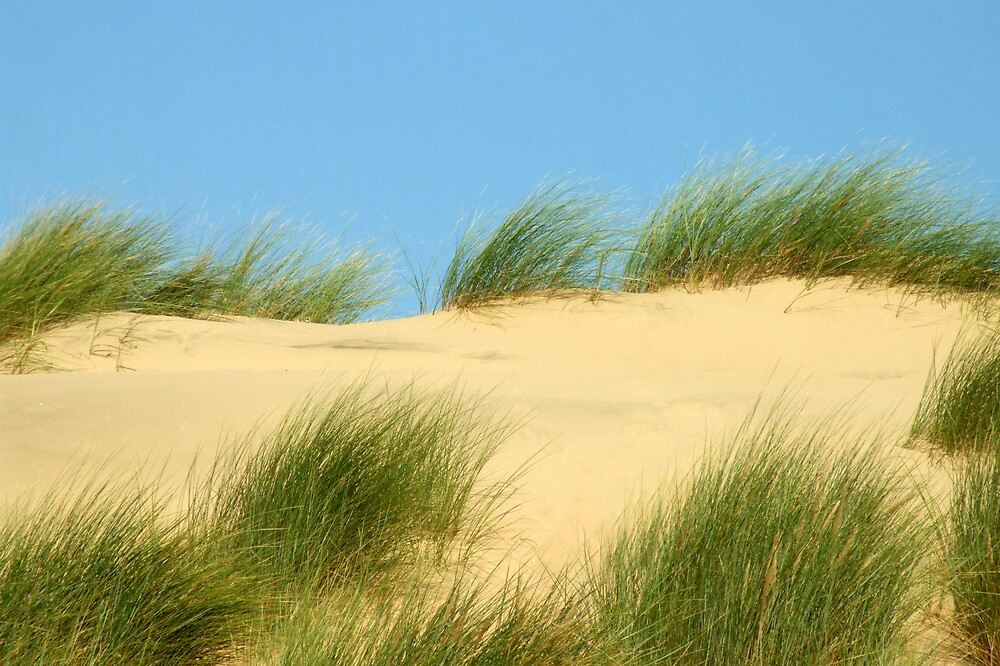 Sand dunes in colour by Bev Evans