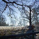 Frosty Field in Winter by Sue Robinson