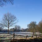 Country Scene in Winter by Sue Robinson