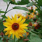 Artistic Sunflower by Christian  Zammit