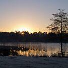 Dawn Glow by Sue Robinson